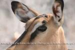 antilope-1200x400