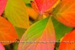 feuilles-1200x400