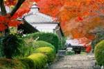 temple-feuilles-rouges