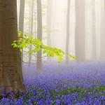 brume-arbre